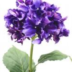 CFH012 31in Hydrangea Eggplant W $9.95 ea