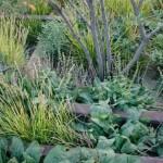 highline rail grass