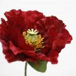 red-poppy1