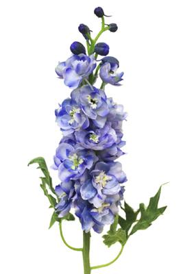 Cfd Catalog Gt Flowers A M Gt Delphinium