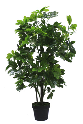 Cfd Catalog Plants Greenery Floor Plant